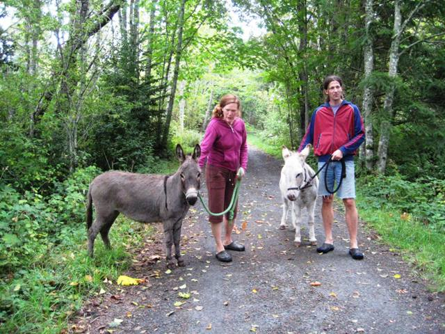 Galloping Goose Trail donkeys