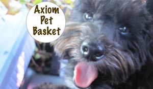 Best Bike Pet Basket under $80 – Axiom Dual Function Premium Pet Bike Basket Review