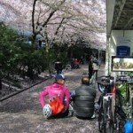 Bikes and Blossoms: Vancouver in the Spring