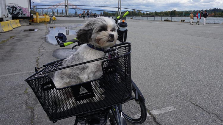 With an electric bike, you can easily carry cargo - such as your dog! 15 Reasons to Get an Electric Bike