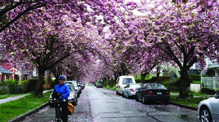 Bike the Blossoms in Vancouver, 9 April 2016